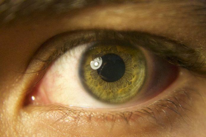 Pupilla grande e intelligenza